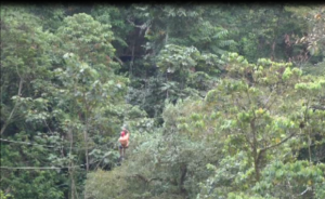 The Last and longest zip line of the canopy tour.  I estimated it to be 300 meters long